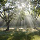लेखांक ३: कृपा आणि वैभव